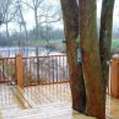Decking area with tree